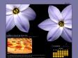 http://www.ratous.com/index.php?2007/08/24/1056-la-pizza-hitler-ne-passe-pas